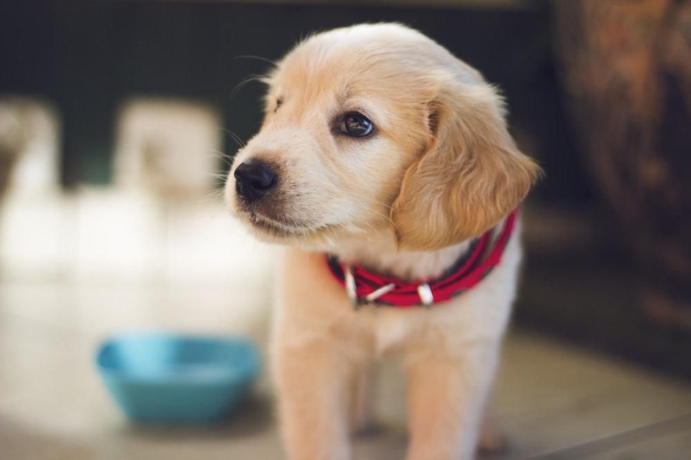 pet health insurance Columbus OH